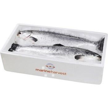 Saumon 3/4 kg EQR - Marée - Promocash Millau